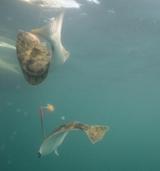 Рыбалка в Магадане: описание рыболовных районов, отзывы